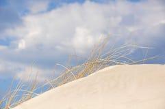在一个沙丘的草在海滩 图库摄影