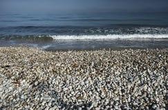 在一个沙滩的小卵石 免版税库存图片