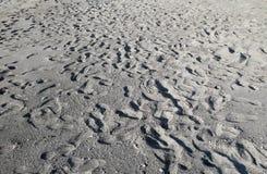 在一个沙滩的许多脚步 免版税图库摄影