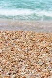 在一个沙滩的贝壳在海附近 免版税库存图片