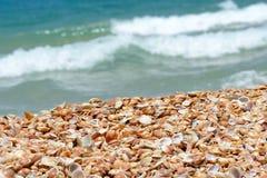 在一个沙滩的贝壳在海附近 免版税图库摄影