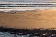 在一个沙滩的孤独的狗处于低潮中在下午太阳 免版税库存图片