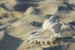 在一个沙滩的巧克力精炼机 免版税库存图片