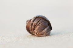 在一个沙滩的巧克力精炼机 库存图片