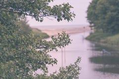 在一个沙滩的树枝 库存图片