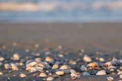 在一个沙滩的贝壳在日落 免版税库存照片