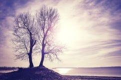 在一个河岸的双树剪影日落的 库存照片
