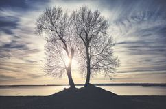 在一个河岸的双树剪影日落的 库存图片