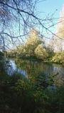 在一个河岸的看法通过分支在晴朗的秋天早晨 免版税图库摄影
