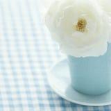 在一个浅兰的花瓶的白色玫瑰 库存图片