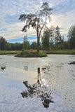 在一个海岛上的一棵高树在池塘在农庄公园Znamenskoye-Rayok庄园(18世纪)在Torzhok区 免版税库存图片