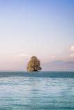 在一个海岛上的树在湖 库存照片