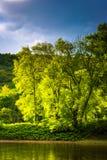 在一个海岛上的树在特拉华河,被看见在特拉华水 免版税库存图片
