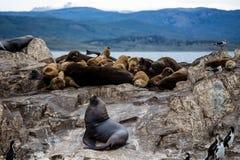 在一个海岛上的鸬鹚殖民地乌斯怀亚的在小猎犬海峡小猎犬海峡,火地群岛,阿根廷 图库摄影