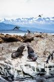 在一个海岛上的鸬鹚殖民地乌斯怀亚的在小猎犬海峡小猎犬海峡,火地群岛,阿根廷 库存照片