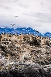 在一个海岛上的鸬鹚殖民地小猎犬频道的乌斯怀亚的,火地群岛,阿根廷 库存图片