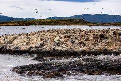 在一个海岛上的鸬鹚殖民地小猎犬频道的乌斯怀亚的,火地群岛,阿根廷 免版税库存图片