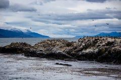 在一个海岛上的鸬鹚殖民地小猎犬频道的乌斯怀亚的,火地群岛,阿根廷 库存照片