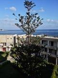 在一个海滩的巨型树在亚历山大,埃及 免版税图库摄影