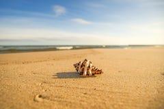 在一个海滩的巨型青蛙壳与海浪 库存图片