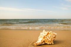 在一个海滩的巨型青蛙壳与海浪 免版税库存图片