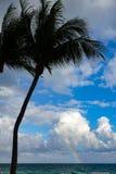在一个海滩的棕榈树与天空蔚蓝和彩虹 免版税库存图片