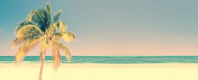 在一个海滩的棕榈树在Cayo Levisa古巴,与拷贝空间,葡萄酒旅行概念的全景背景 免版税库存图片