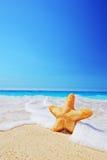 在一个海滩的海星与清楚的天空和通知 免版税库存照片