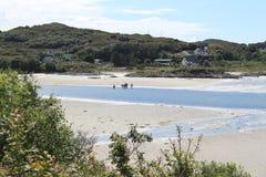 在一个海滩的马在苏格兰 免版税库存照片