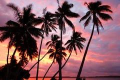 在一个海滩在日落, Ofu海岛,汤加的现出轮廓的棕榈树 免版税库存图片