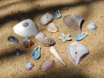 在一个海滩收集的壳在斯里兰卡 库存照片