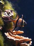 在一个海洋水族馆的美丽的鱼 图库摄影