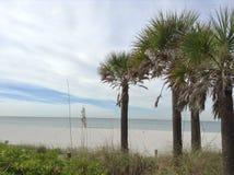 在一个海滩的假期与棕榈树 库存图片