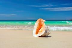在一个海滩的壳在金黄热带太阳下放光 免版税图库摄影