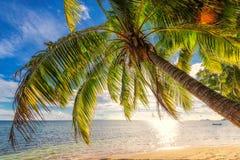 在一个海滩的棕榈树在塞舌尔群岛的日落时间 免版税库存图片