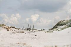 在一个海滩的沙丘在Leba,波兰 免版税库存图片