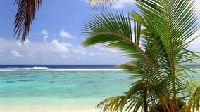 在一个海滩的波浪与棕榈树 股票视频
