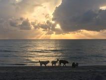 在一个海滩的狗在日出 免版税库存照片