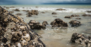 在一个海滩的水在新西兰 免版税库存照片