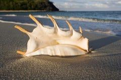 在一个海滩的贝壳在斐济 库存图片