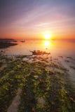 在一个海滩附近的日出与红色和绿色海草在巴厘岛,印度尼西亚 库存照片