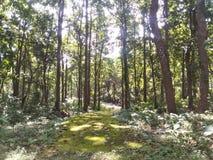 在一个深森林里 图库摄影