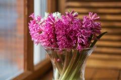 在一个清楚的花瓶的桃红色风信花在窗口 库存照片