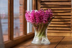 在一个清楚的花瓶的桃红色风信花在窗口 库存图片