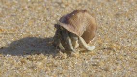在一个温暖的热带海滩的寄居蟹与波浪的声音- 4k特写镜头
