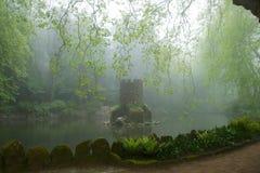 在一个湖中间耸立在一个有薄雾的森林里 免版税库存照片