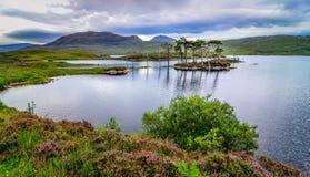 在一个湖使树环境美化看法在苏格兰 免版税库存图片