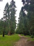 在一个湖旁边的森林在米德塞科斯 免版税库存图片