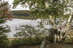 在一个湖旁边的白桦在秋天-阿尔根金族省Pa 库存图片