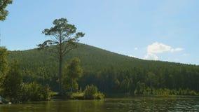 在一个湖的岸的树早晨光的 在湖的岸的高大的树木 图库摄影